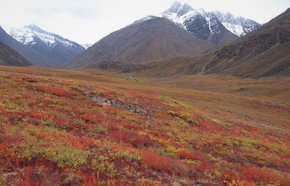 Арктическая тундра в период оттепели