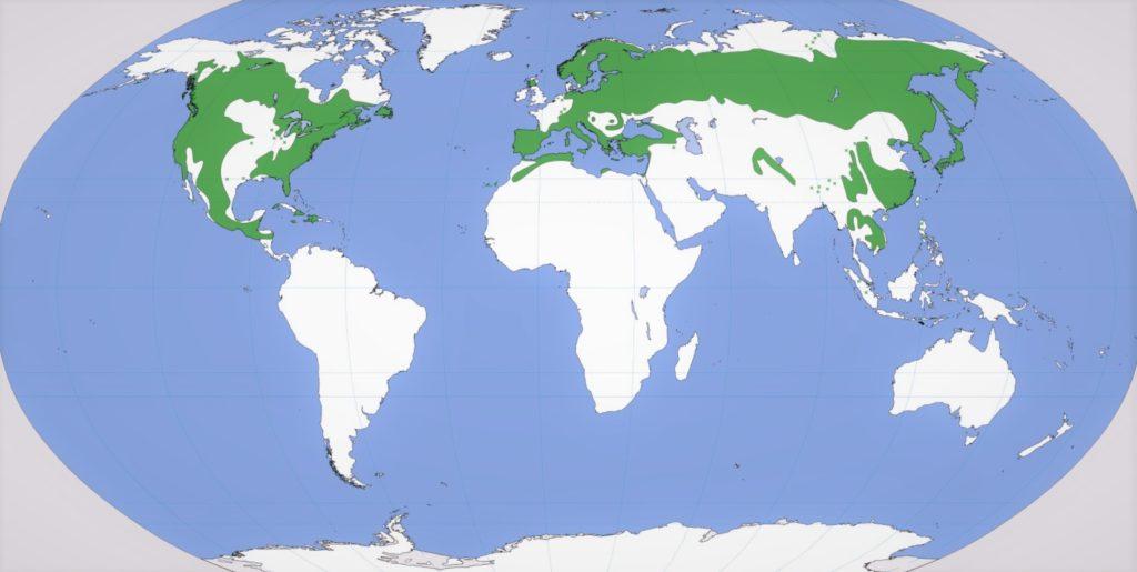 Карта распространения сосен