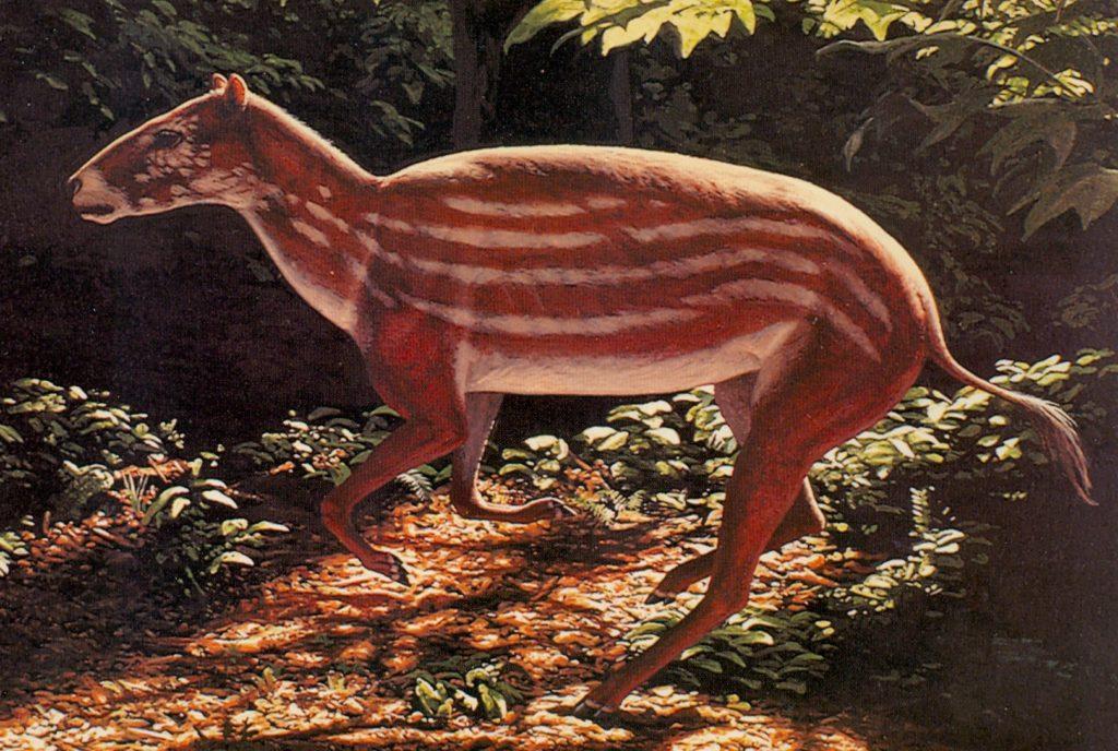 Рисунок эогиппуса - животного, от которого произошли лошади