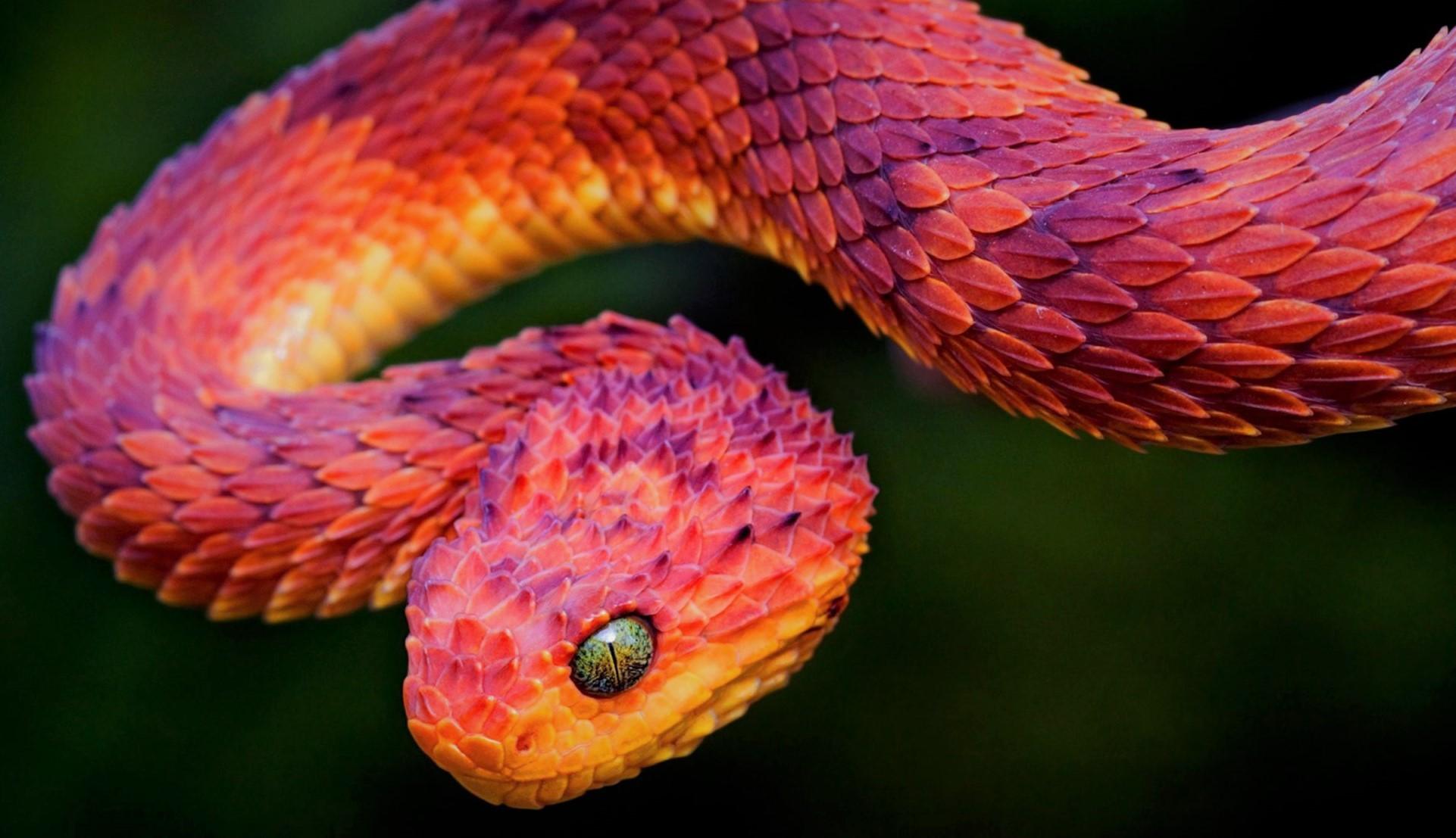 Змеи – виды, список, названия, особенности, описание, фото и видео