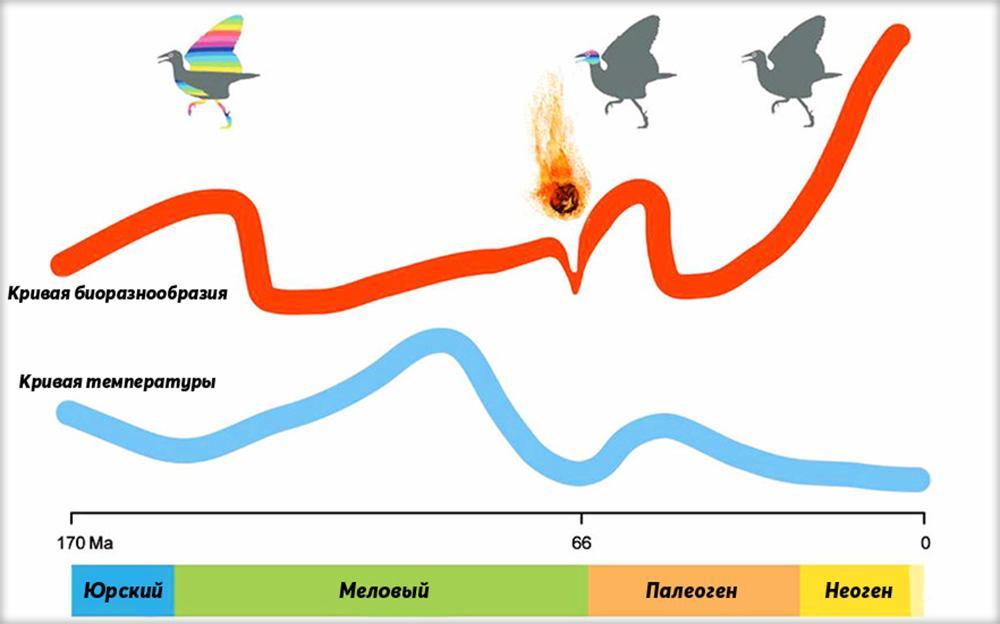 Зависимость видового разнообразия птиц от изменения климата
