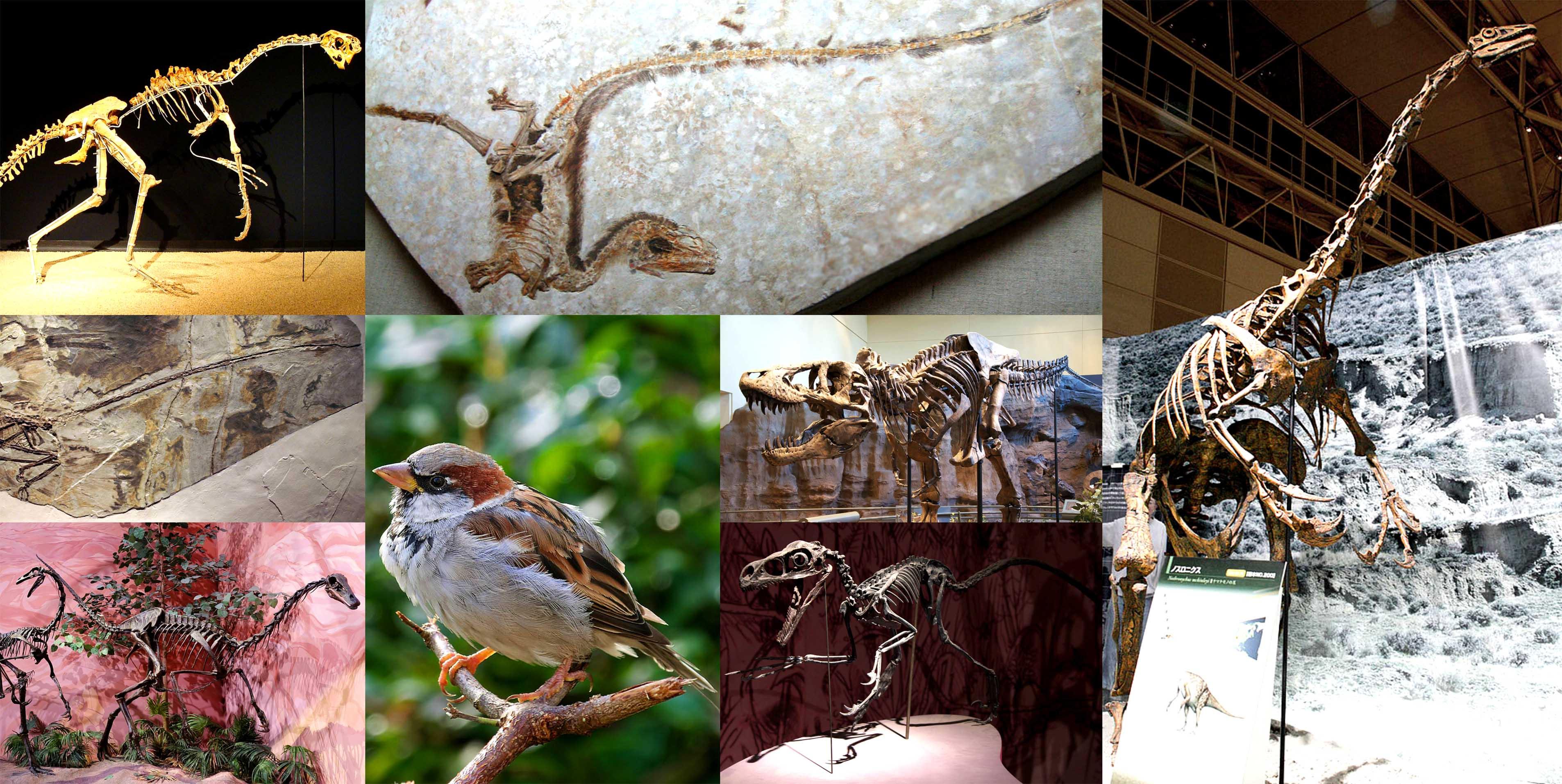 Птицы - современные представители целурозавров