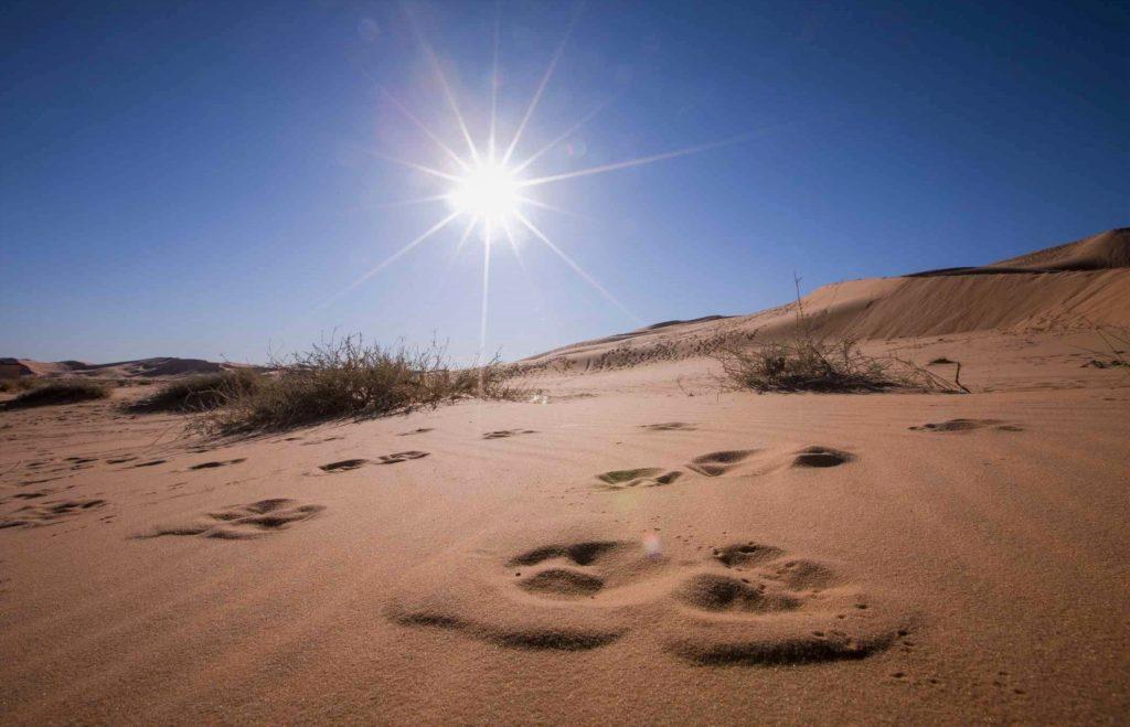 Температура в пустыне может превышать 50 градусов Цельсия