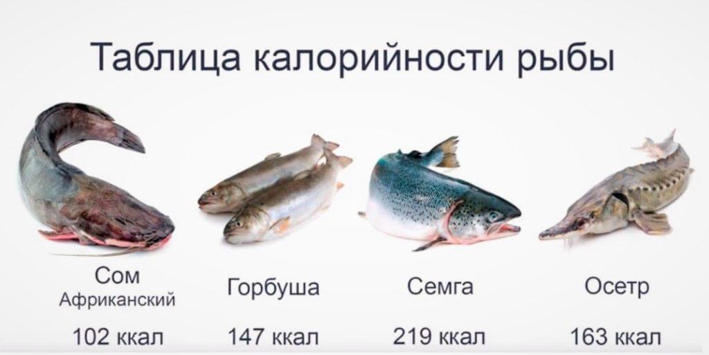 Сравнение калорийности сома с другими видами рыб