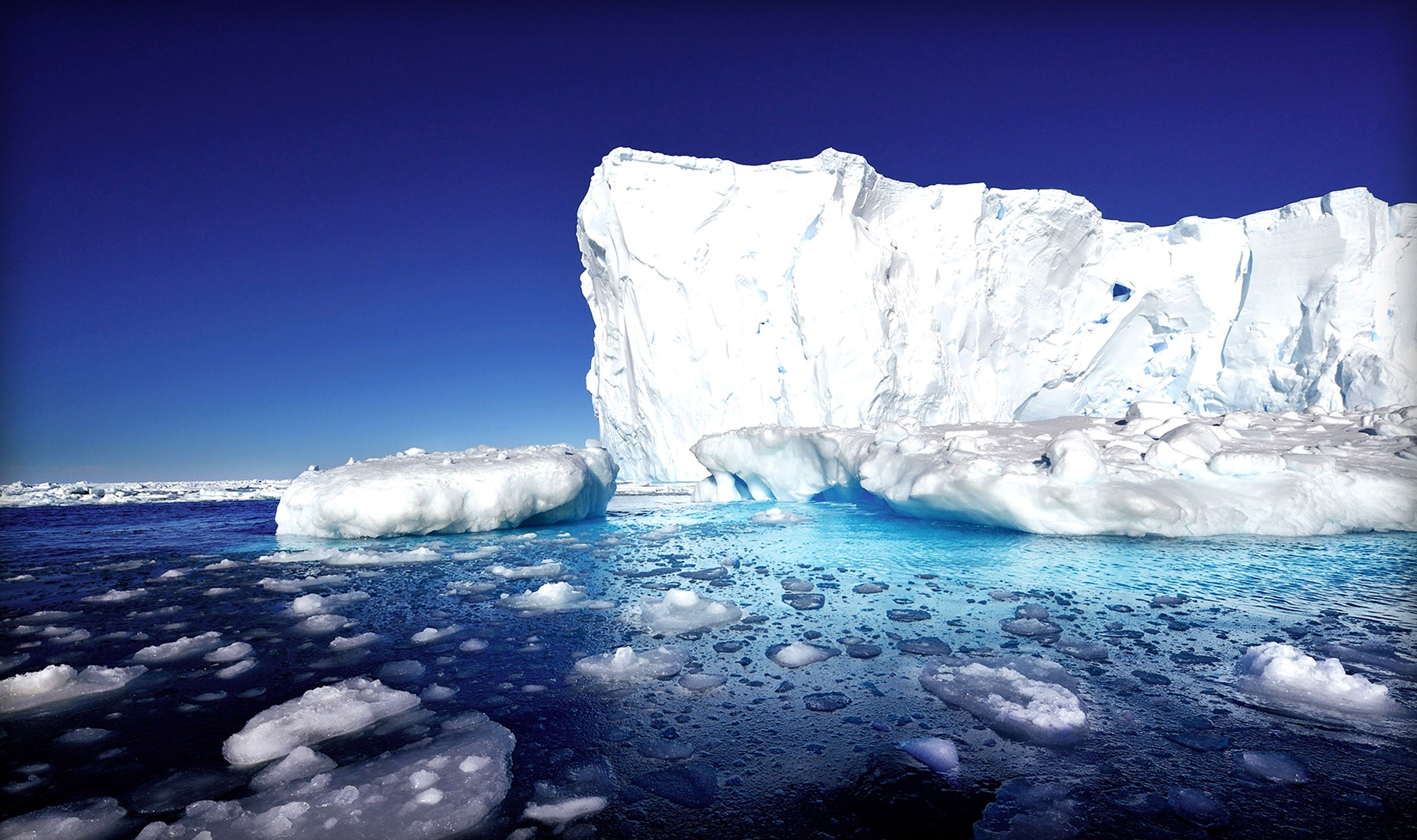 Под ледниками Антарктиды найден новый вид живых организмов