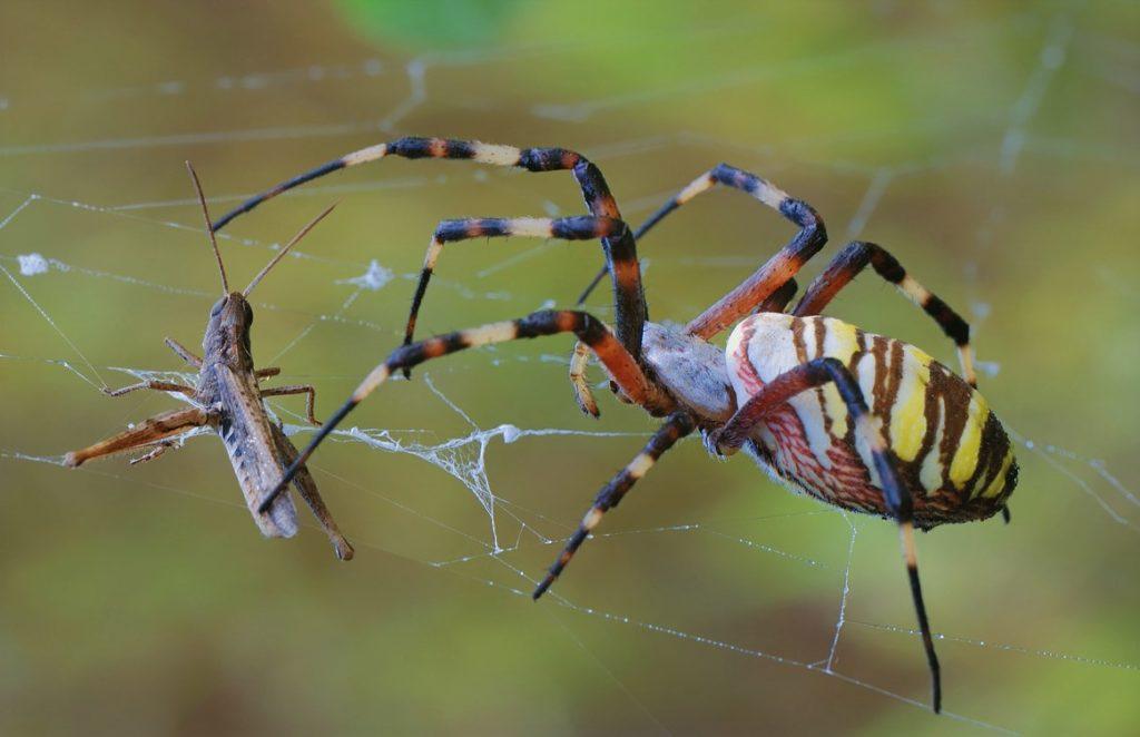 Пауки съедают большое количество насекомых и мешают им распространяться