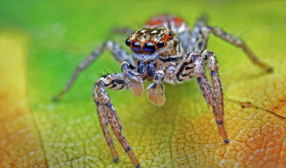 Пауки - виды, список, названия, особенности, описание, фото и видео