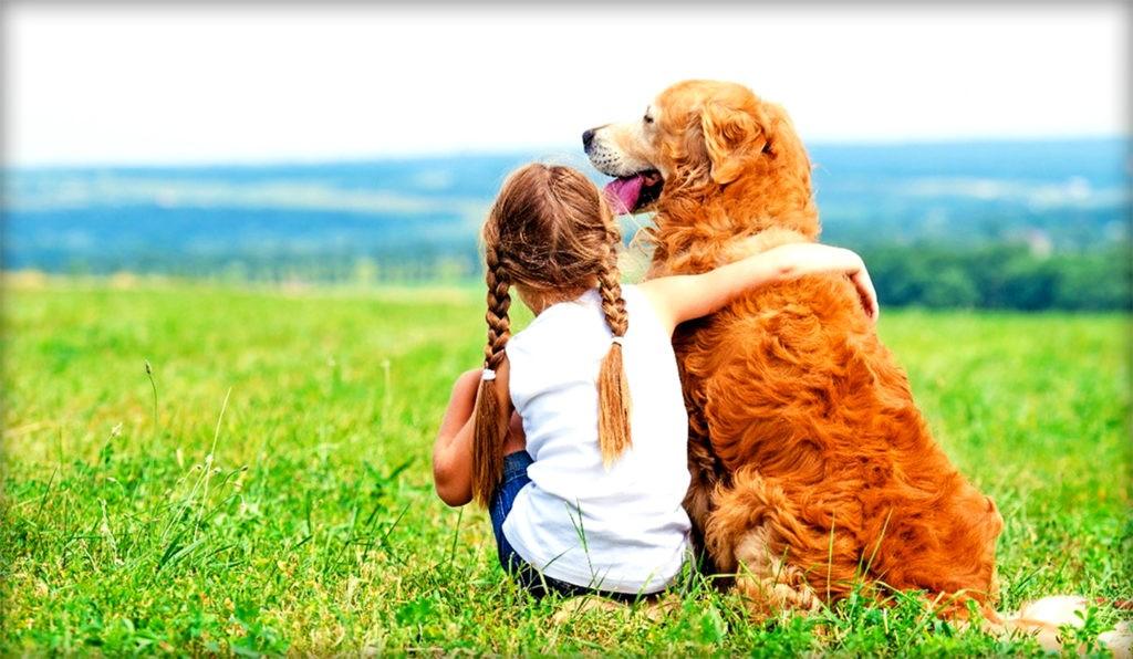 Собака - единственное животное, которое может следить за тем, куда смотрит человек, и пользуется этим