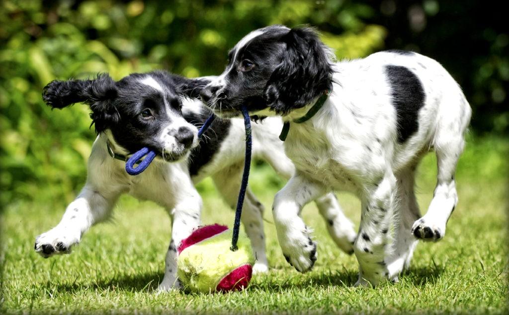 Присутствие хозяина может вызывать у собаки выброс гормонов счастья