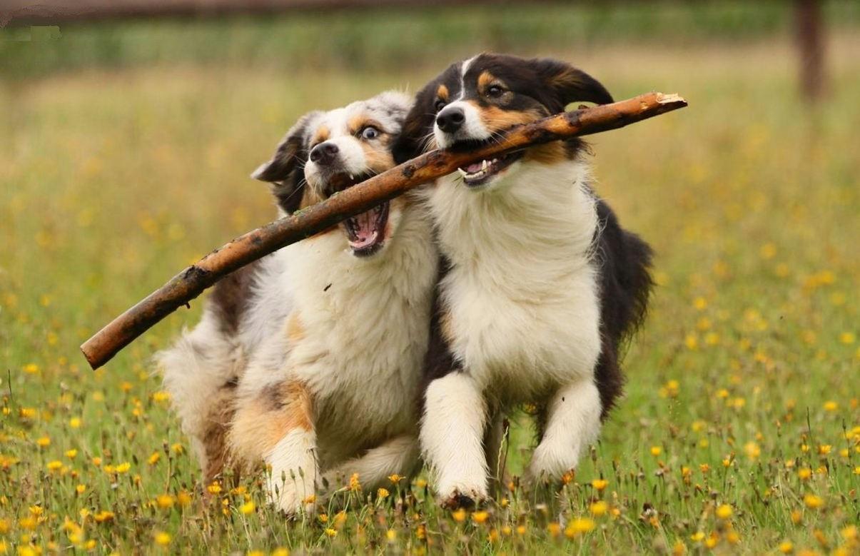 Выяснено влияние присутствия хозяина на поведение собаки