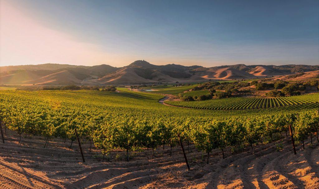 Виноградник на территории пустыни