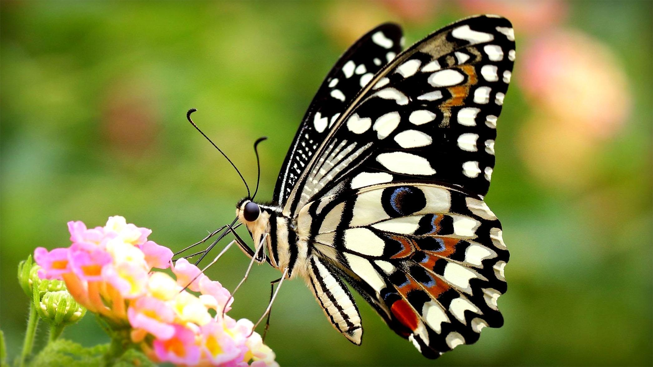 Помнит ли бабочка то, что узнала гусеницей?