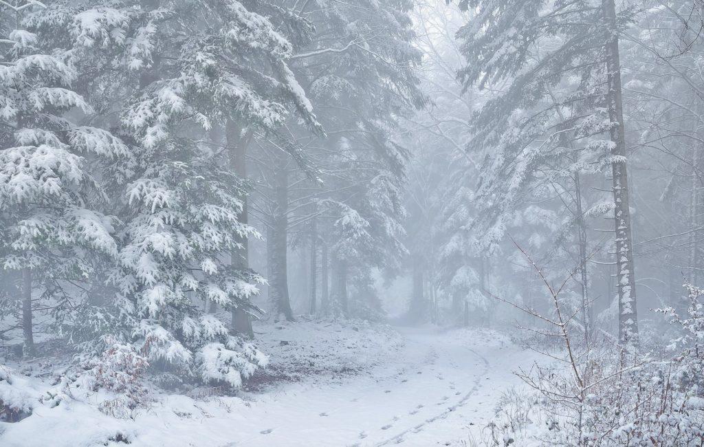 Метель в зимнем лесу