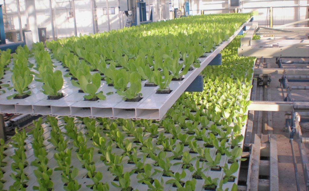 Выращивание овощей с помощью гидропоники