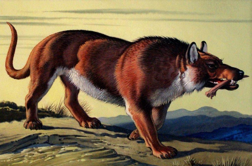 Эндрюсархус - хищный предок млекопитающих