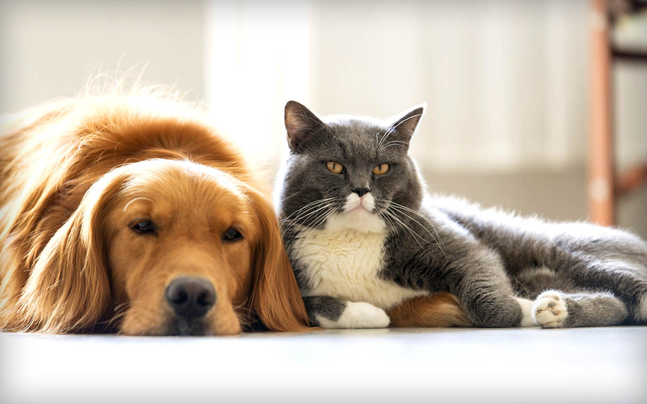 Был ли у кошек и собак общий предок?