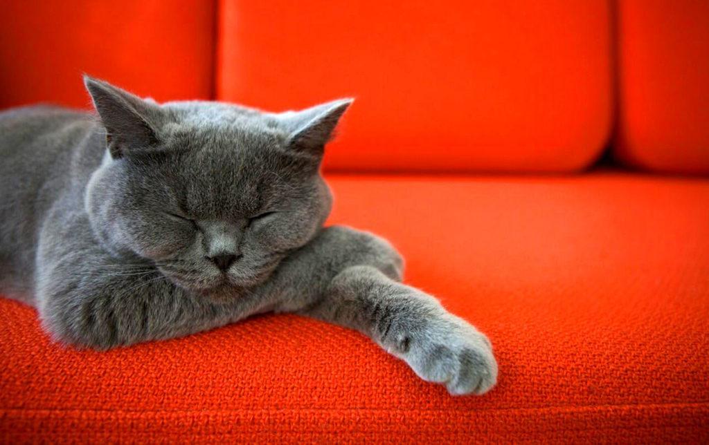 Если кошка продолжает спокойно спать при появлении хозяина, значит она чувствует себя в безопасности