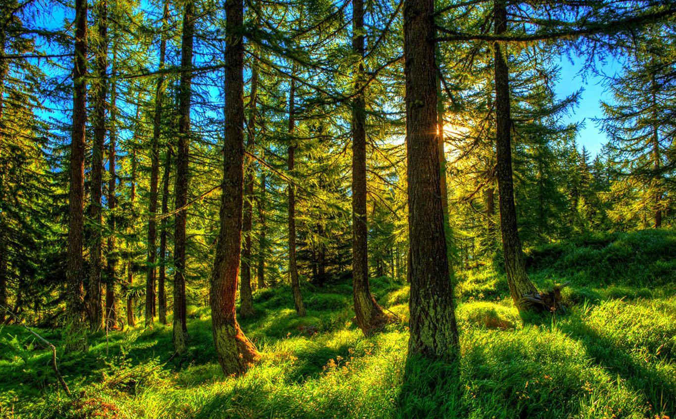 Исследование: поглощение углекислого газа старовозрастными лесами преувеличено