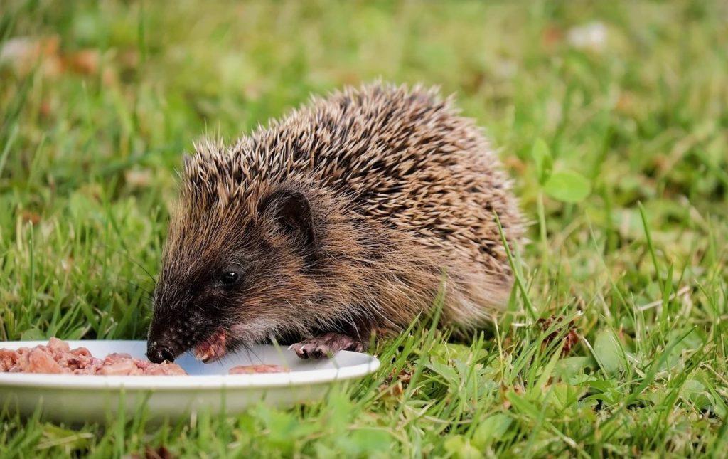 Млекопитающие едят самую разную пищу, каждый вид имеет определенный рацион