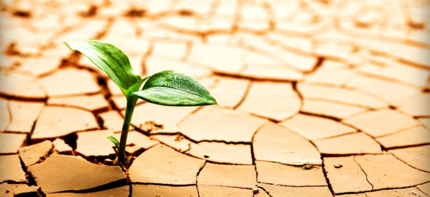 Изучен механизм подготовки растений к засухе