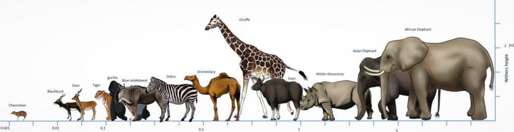 Размеры млекопитающих