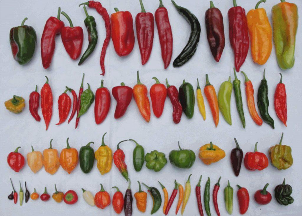 Разные виды перцев