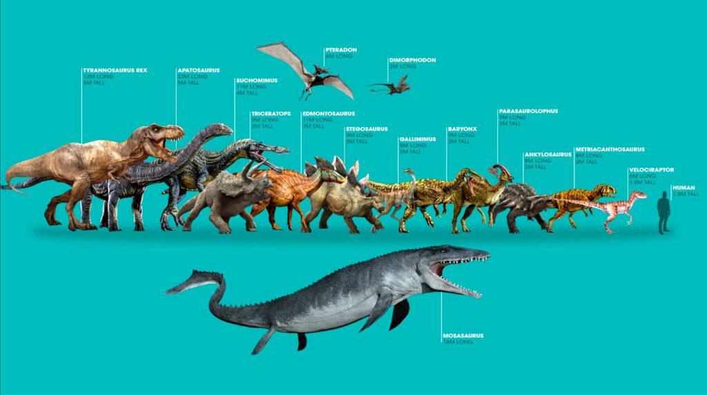 Сравнение размеров динозавров с человеком