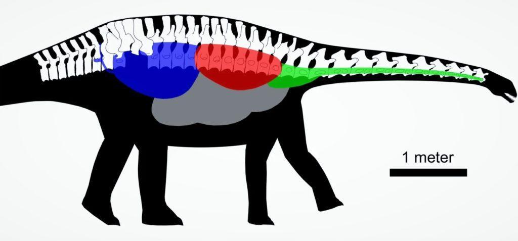 Система воздушных мешков в позвоночнике динозавра