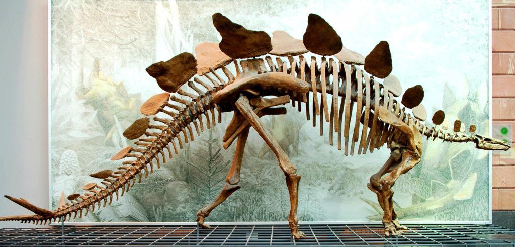 Стегозавр (реконструкция)