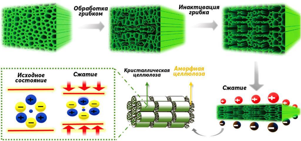 Графическое изображение эволюции структуры древесины после обработки грибком