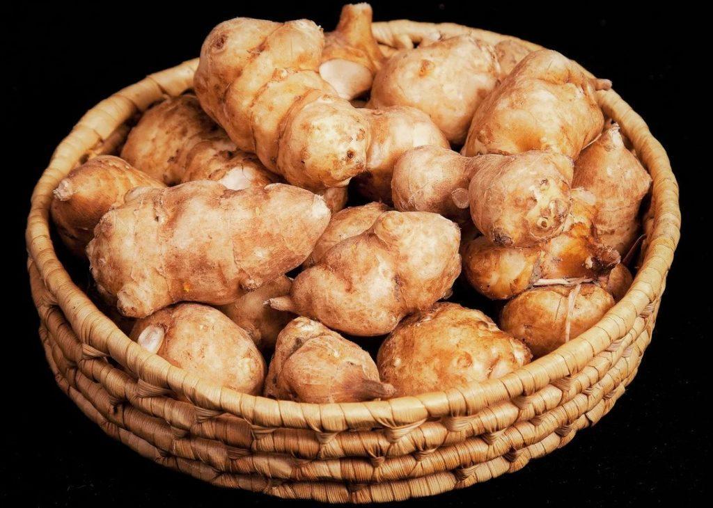 Топинамбур относится клубнеплодным овощам