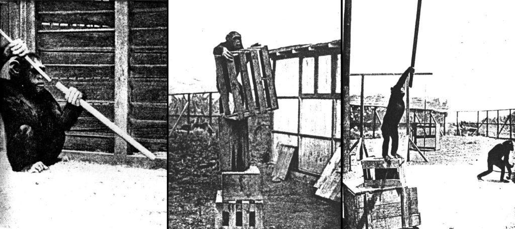 Эксперимент психолога В. Кёлера с обезьяной показал, что животное решает задачи методом проб и ошибок, а также путем озарения