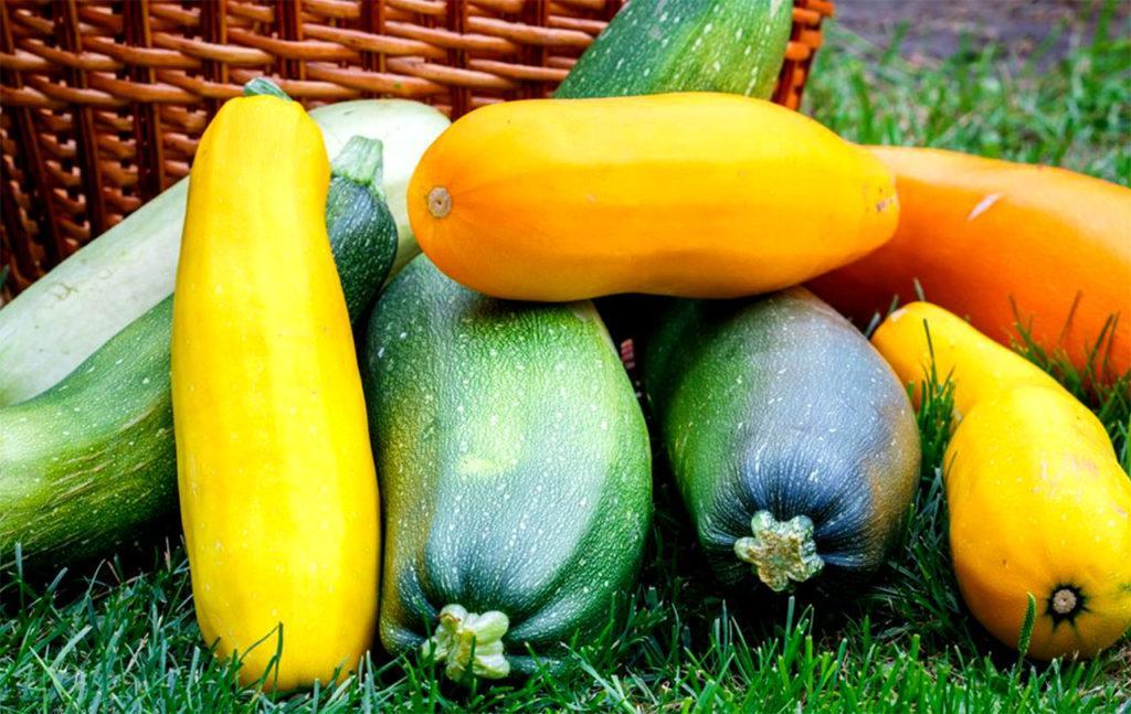 Разные плоды кабачков