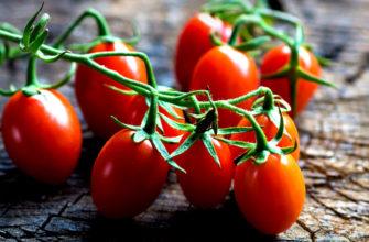 Почему томаты по-русски называются помидорами?