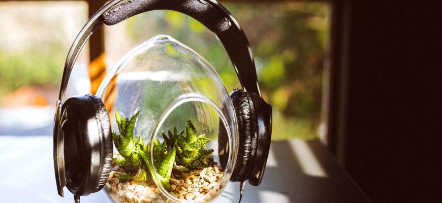 Воздействие шума на растения сохраняется в течение длительного времени