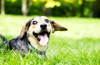 Подтверждено умение животных смеяться – исследование