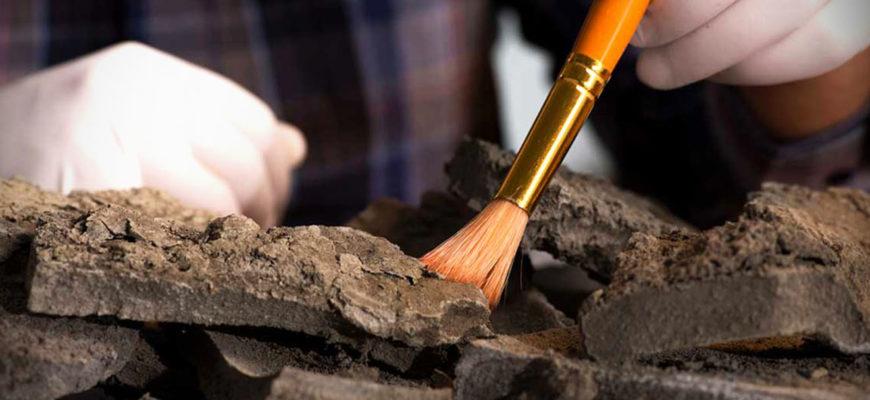В Танзании случайно обнаружены окаменелости животных возрастом 2 млн лет