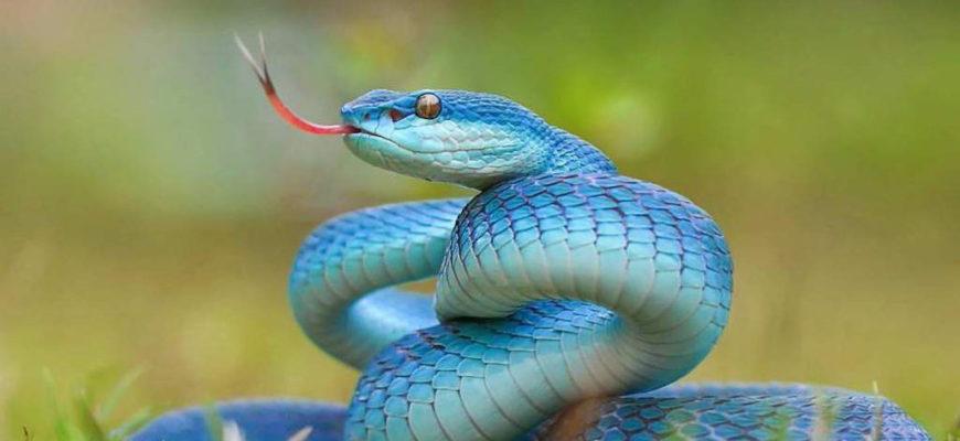 Как слышат змеи?