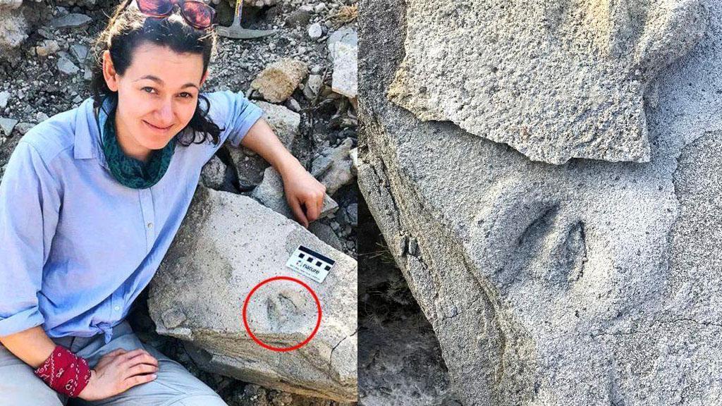 Тесса Плинт и изображения окаменелостей