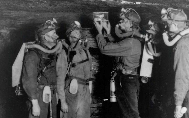 Канарейка в шахте
