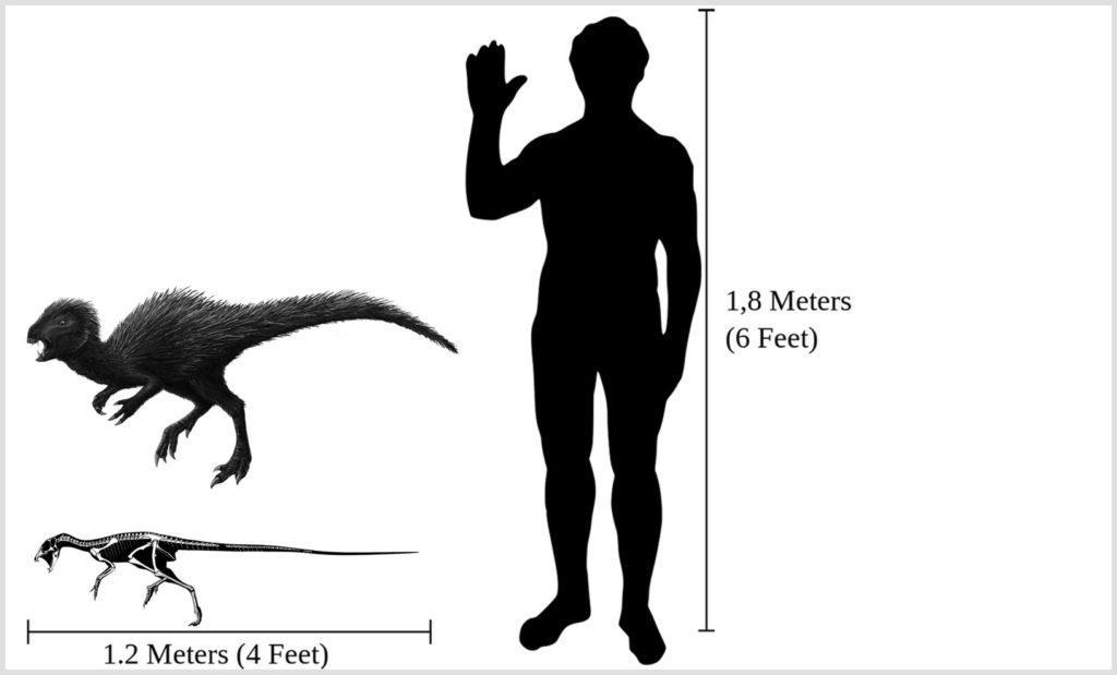 Внешний вид динозавра и сравнение с человеком по размеру