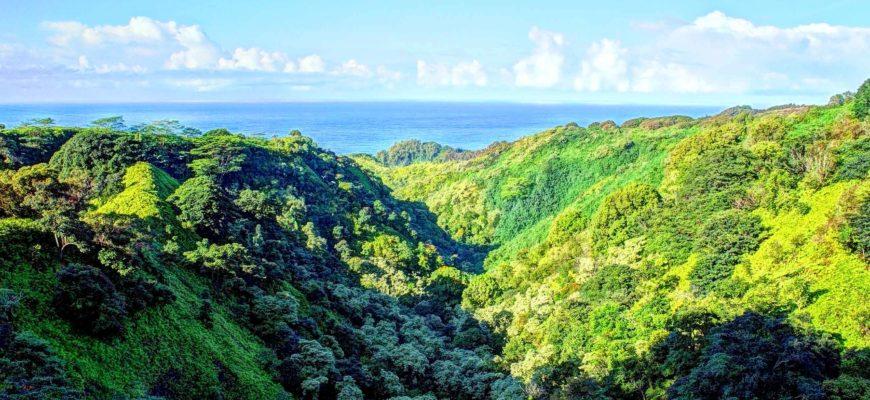 Снижается способность тропических лесов поглощать углекислый газ – исследование НАСА