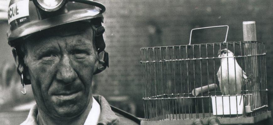 Почему раньше шахтеры брали с собой в шахту канареек?