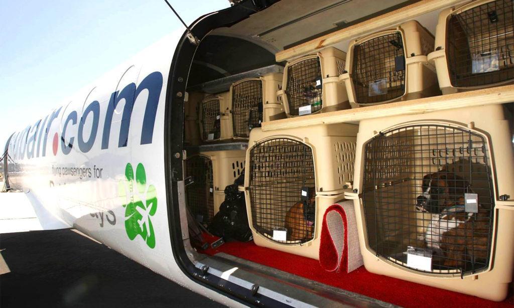 В багажном отсеке животных перевозят в специальных контейнерах