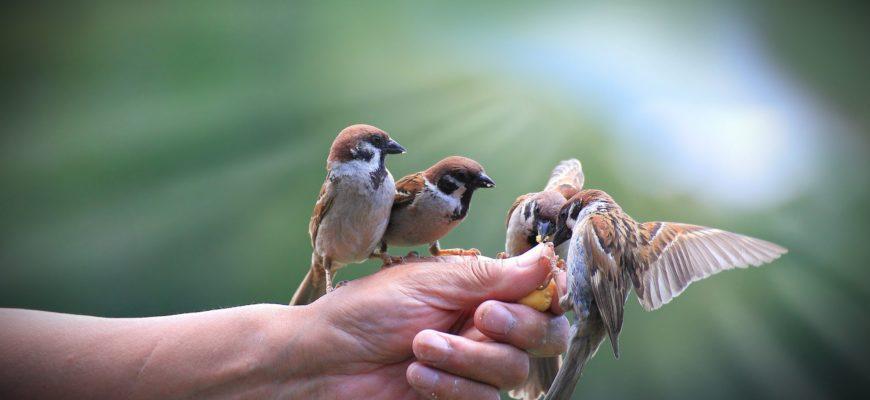 Сколько калорий необходимо птицам?