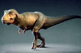 Тираннозавр – описание, размеры, поведение, образ жизни, места обитания, фото и видео