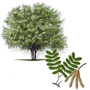 Мескитовое дерево