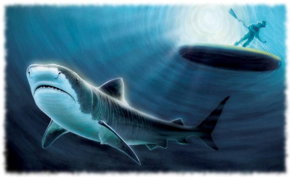 Мифы об акулах