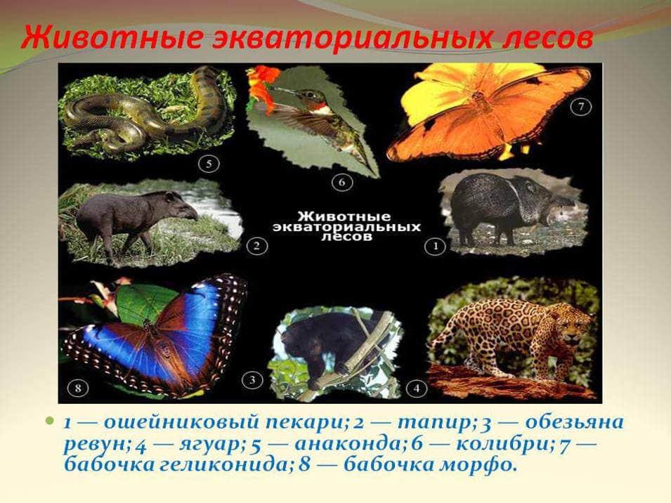 Животные экваториальных лесов
