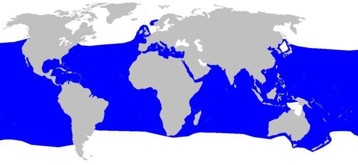 Акула-мако - ареал обитания